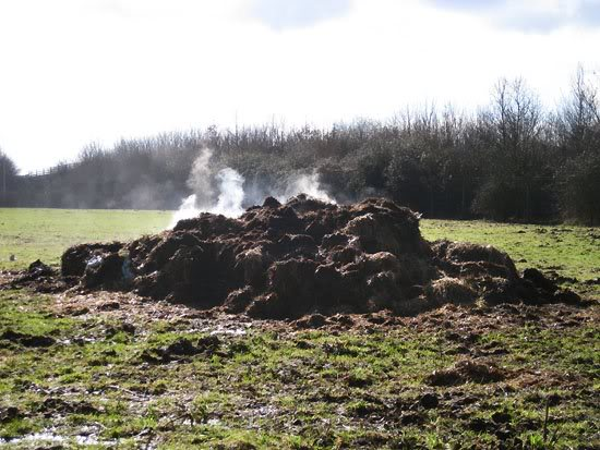 steaming-pile-of-manure